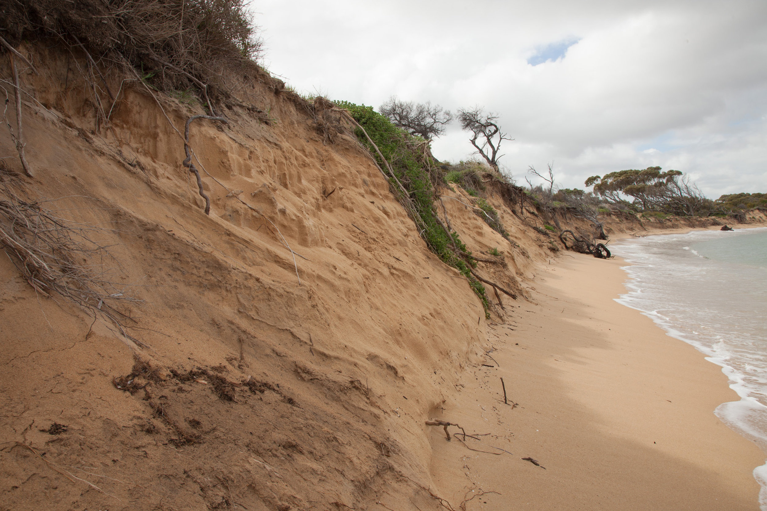 Plate 13: Some of the erosion on the first section of the beach walk from Cape Peron towards Shoalwater