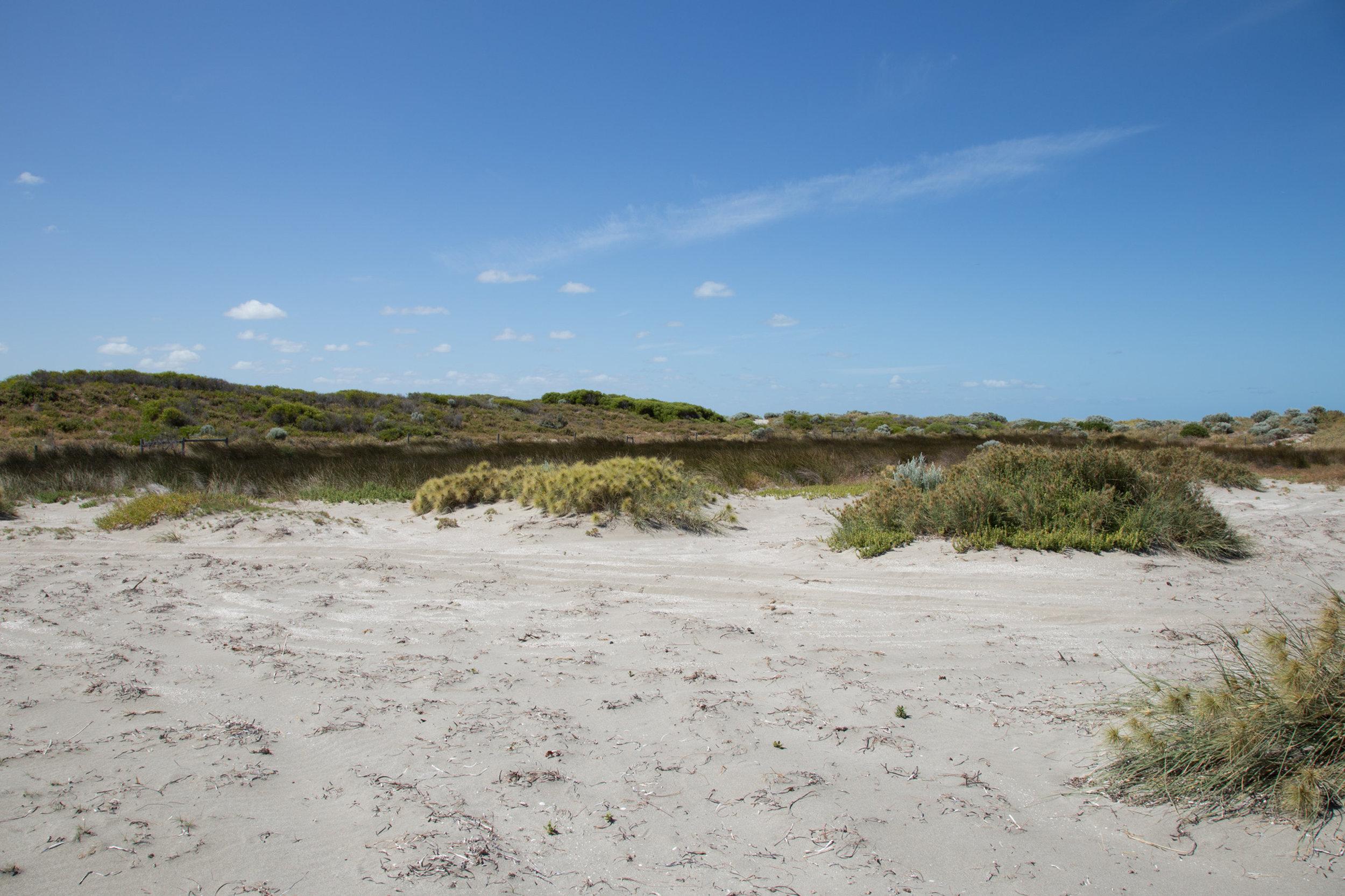 Plate 10: Fresh water wetland at Becher Point.