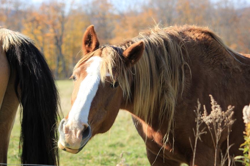 Horses in Wolcott