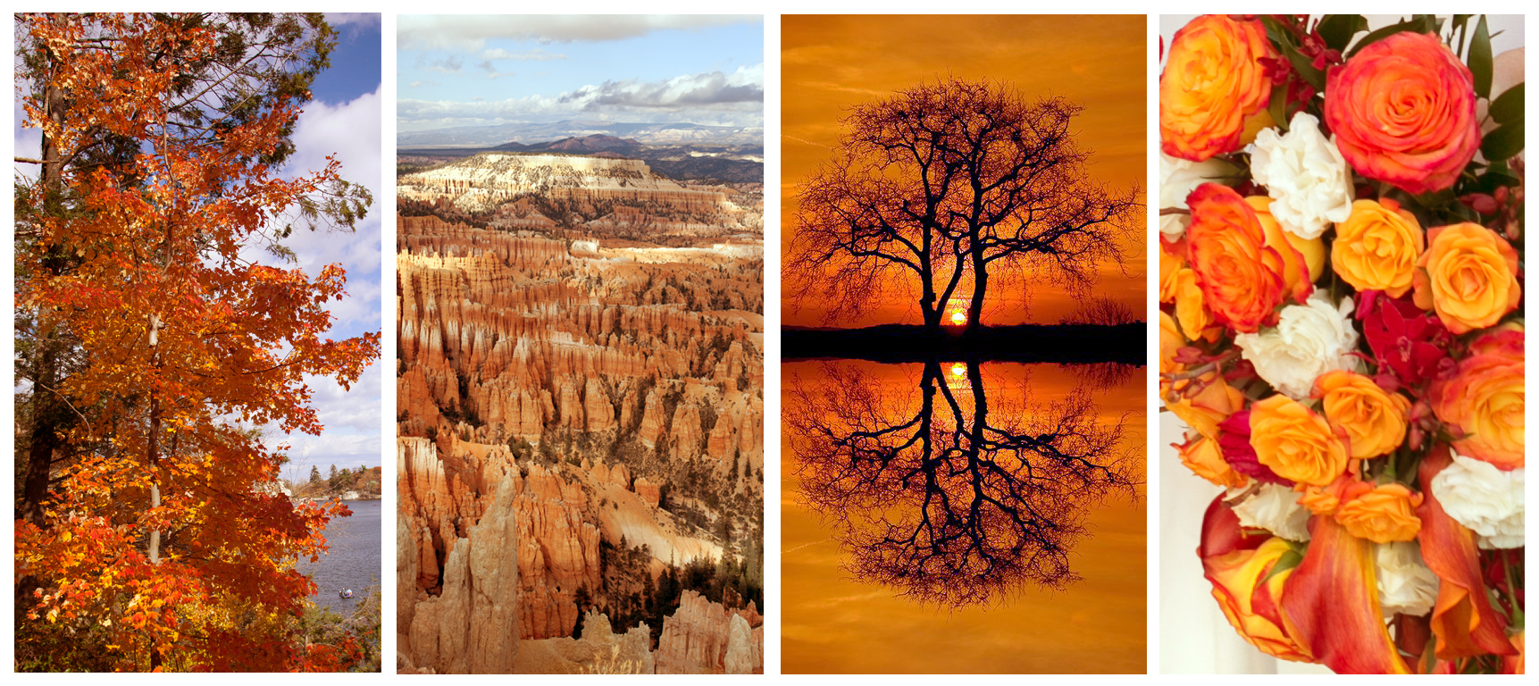 orange-inspiration