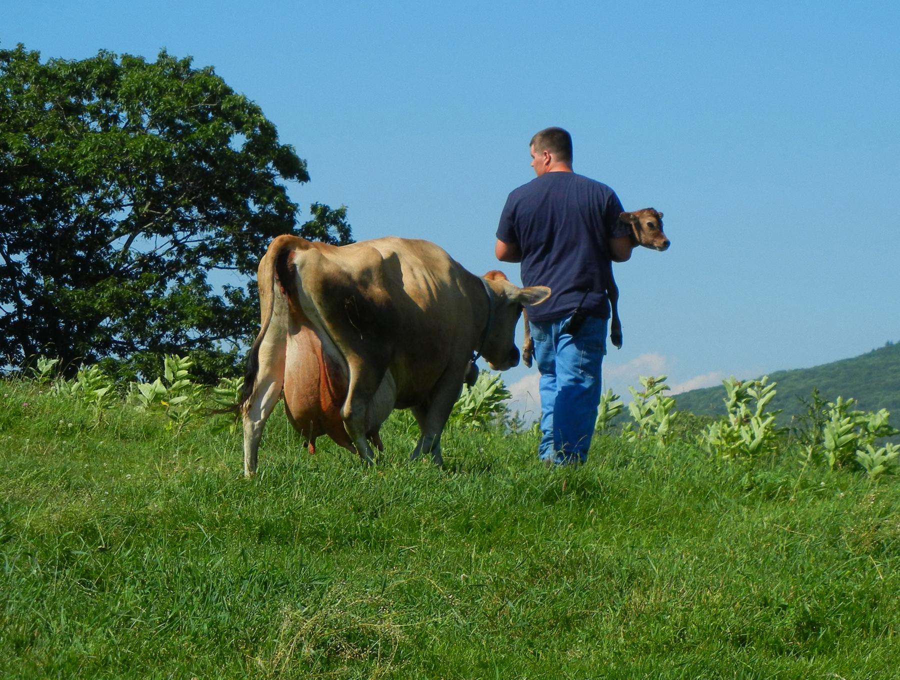 Farmer Dillon with Cathy & Calf at The Inn at East Hill Farm.jpg
