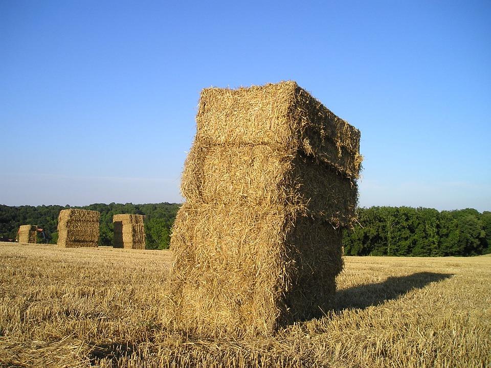 straw-bales-173378_960_720.jpg