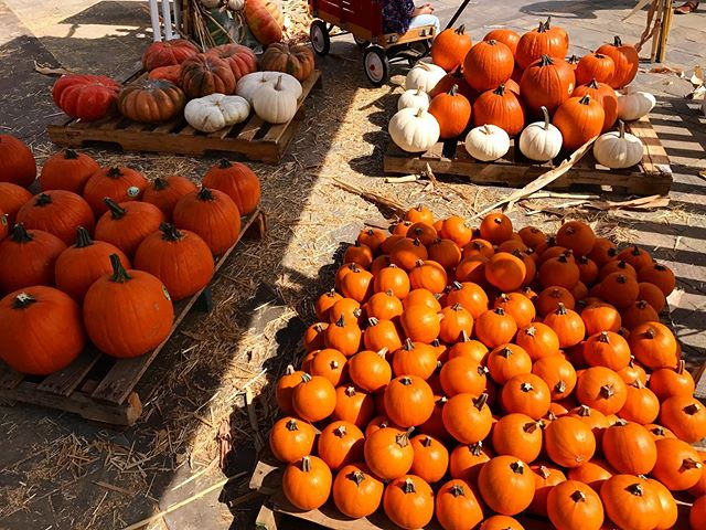 FALL. IS. COMING. 🍁🎃👻