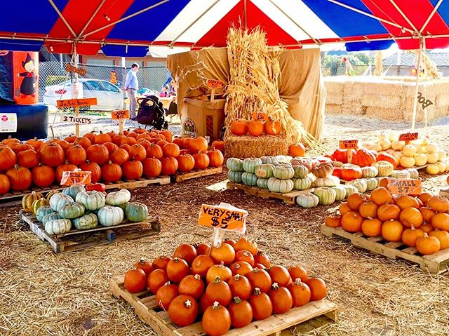 So many pumpkins to choose from! 🤯 We sell many different sizes, colors and types! Come visit us this Saturday and pick up the perfect pumpkin for you!🎃