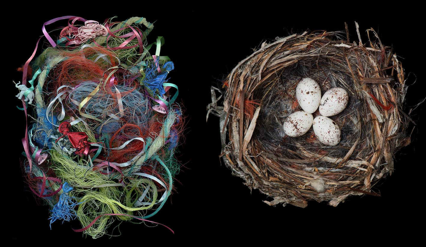Birds' Nests and Refuge: Impermanent Homes - Photographs by Sharon Beals paired with literary writers on immigration.
