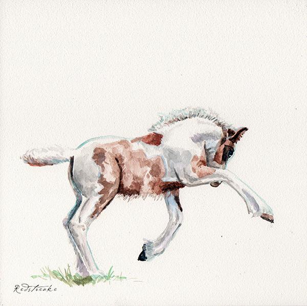 foal_lowres.jpg