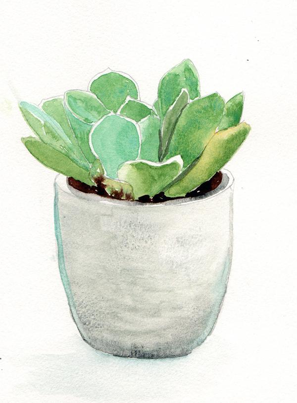 succulent4_lowres.jpg