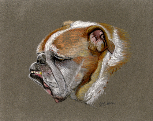 bulldog_lg.jpg