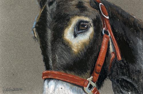 OSWOA-donkey_lg.jpg