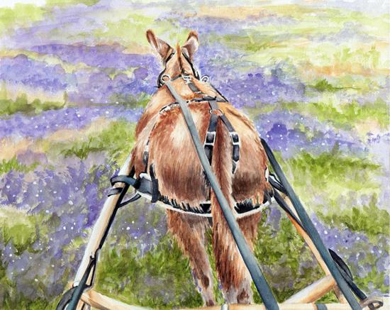 donkey_wc_lg.jpg