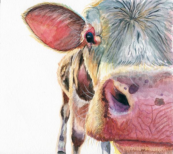 cow_closeup_redstreake.jpg