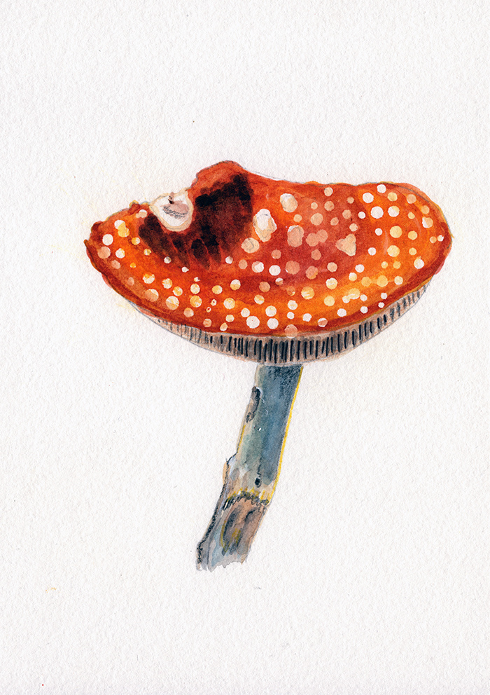 Red spotted Mushroom