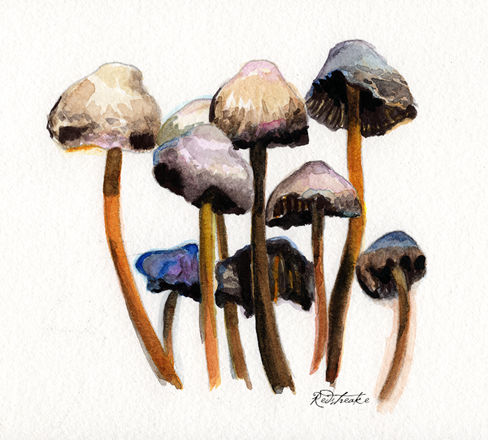 Meeting of the Shrooms