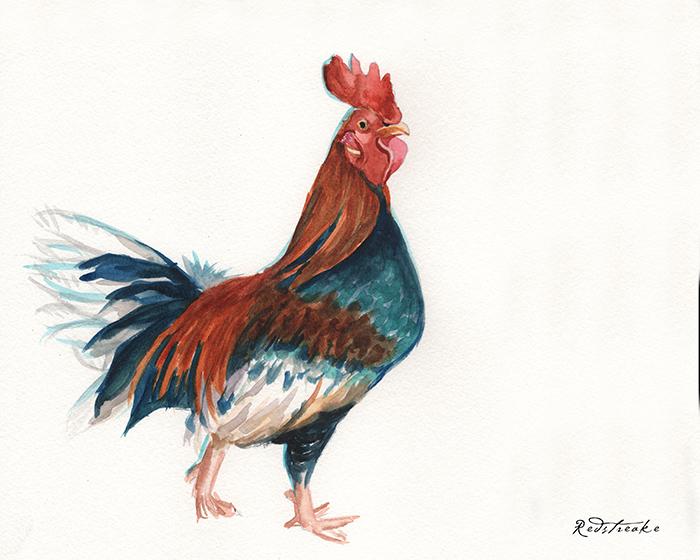 redstreake_rooster.jpg