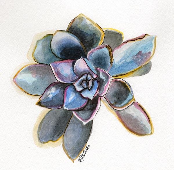 new_succulents1.jpg