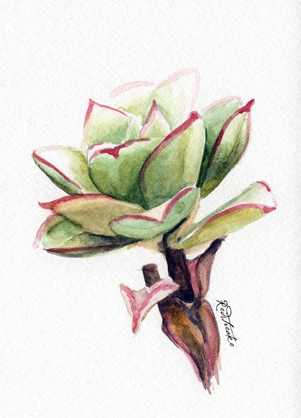 new_succulents2.jpg