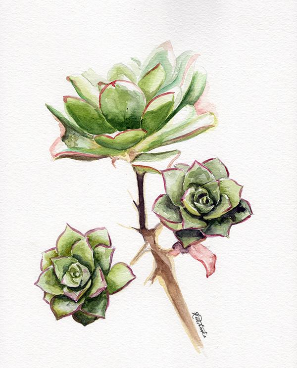 new_succulents3.jpg