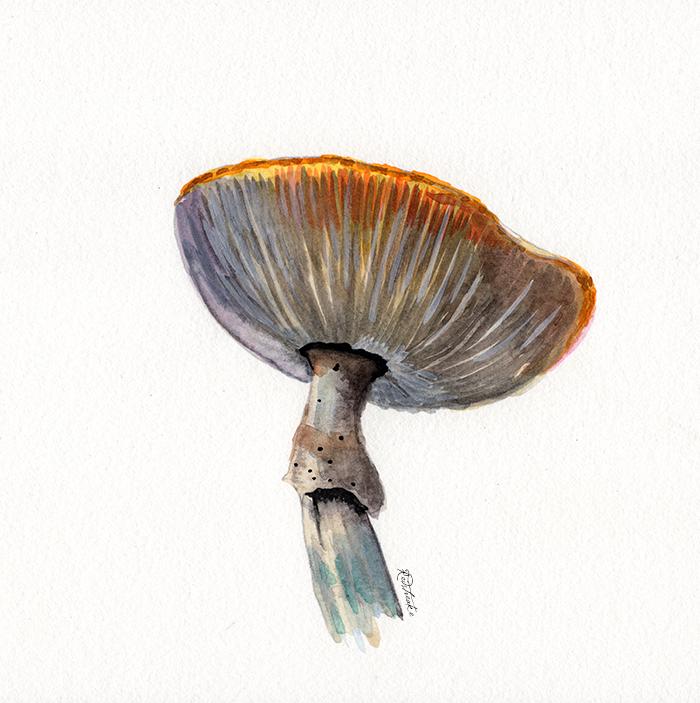 mushrooms2_lowres.png