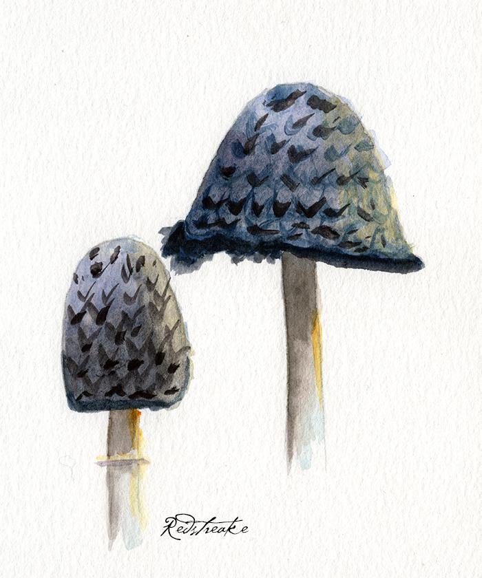 mushrooms4_lowres.png