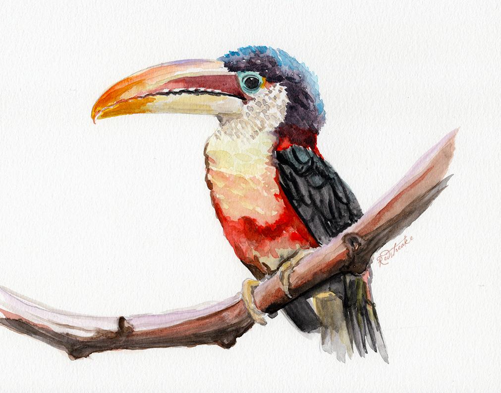 toucan_lowres.jpg