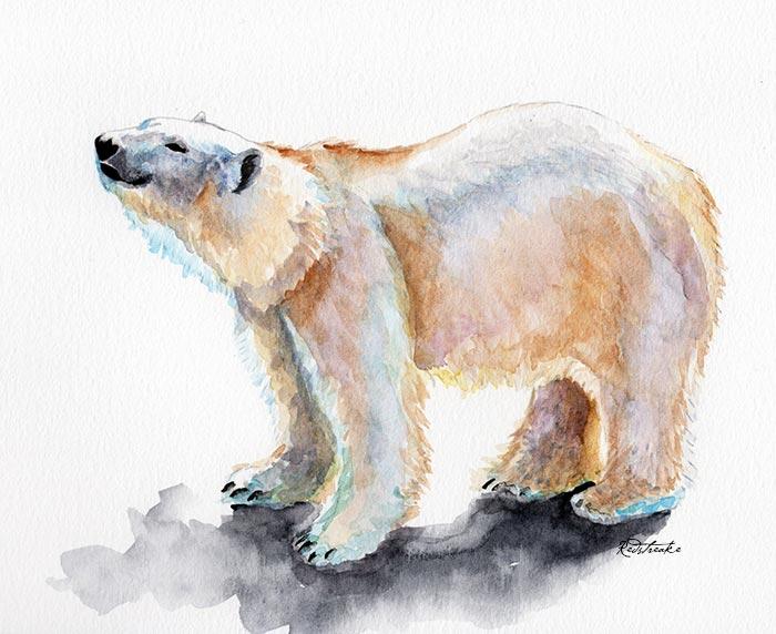 polarbear_lowres_redstreake.jpg