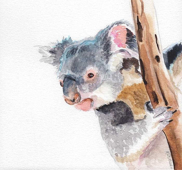 koala_lowres_redstreake.png