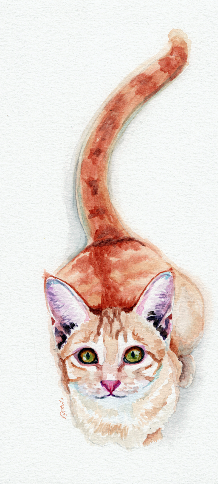 orangekitty_18x40_redstreake.png