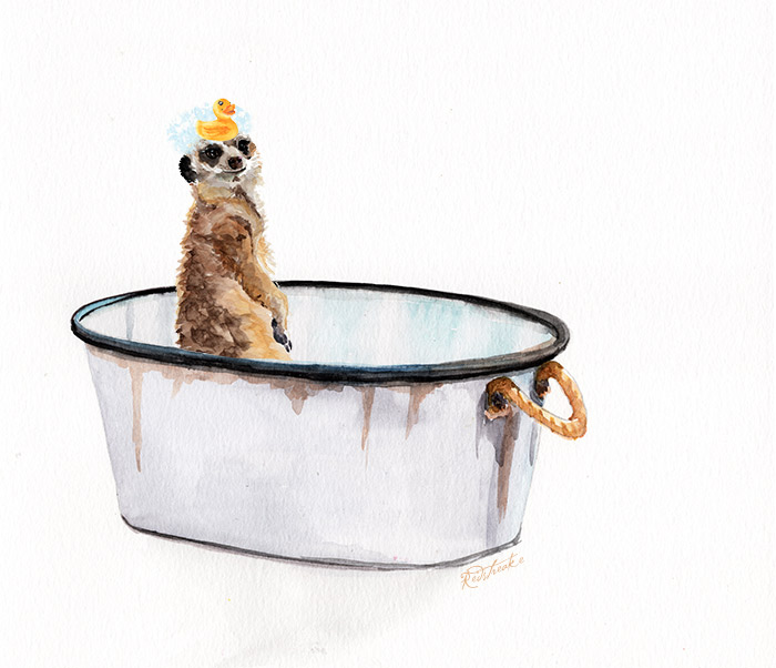 meerkatbath.jpg