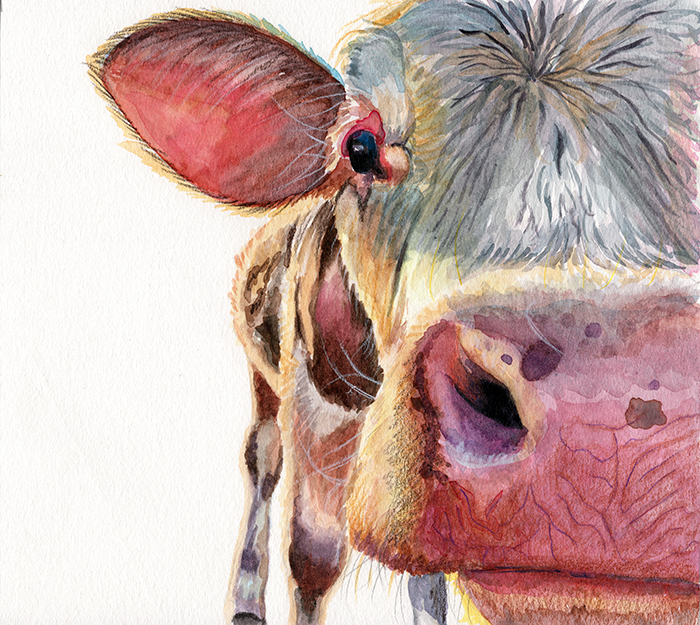 watercolor_cow_1.png