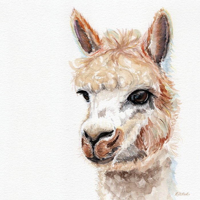 alpacaportrait2_redstreake.jpg