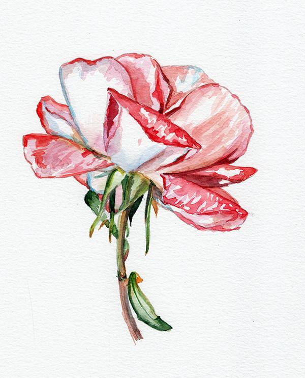 flowerclass1.jpg