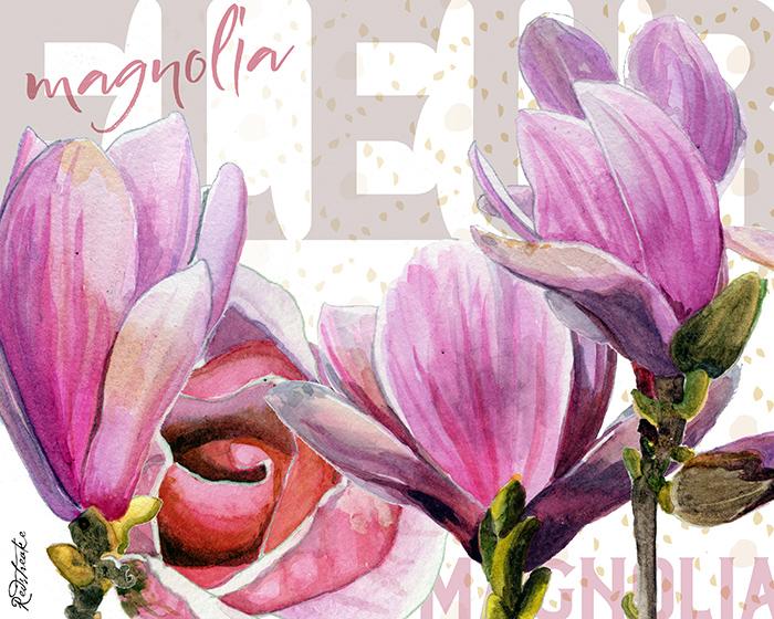 magnolia_layout_redstreake.jpg