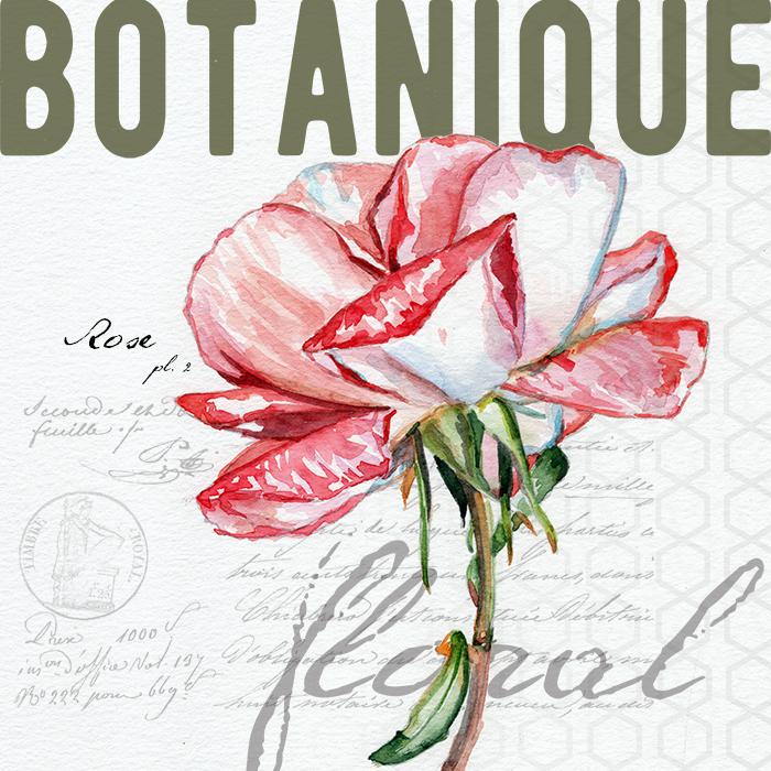 rose_botanical_redstreake.png
