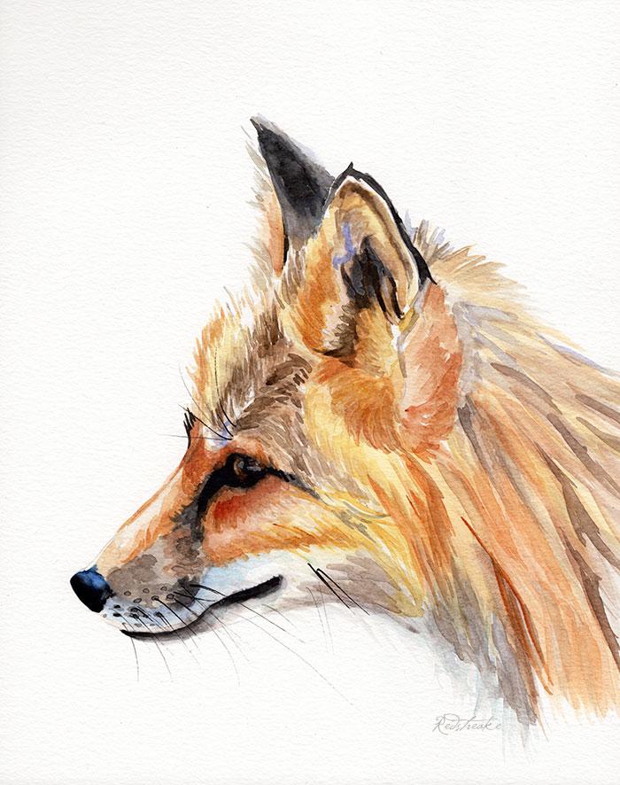 foxportrait_redstreake.jpg