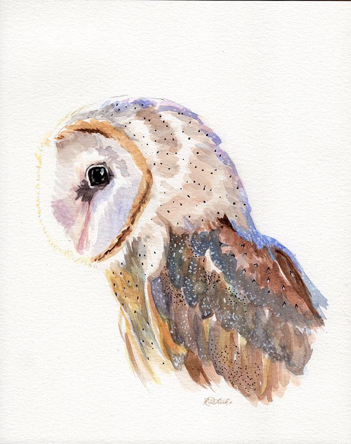 owl_redstreake.jpg