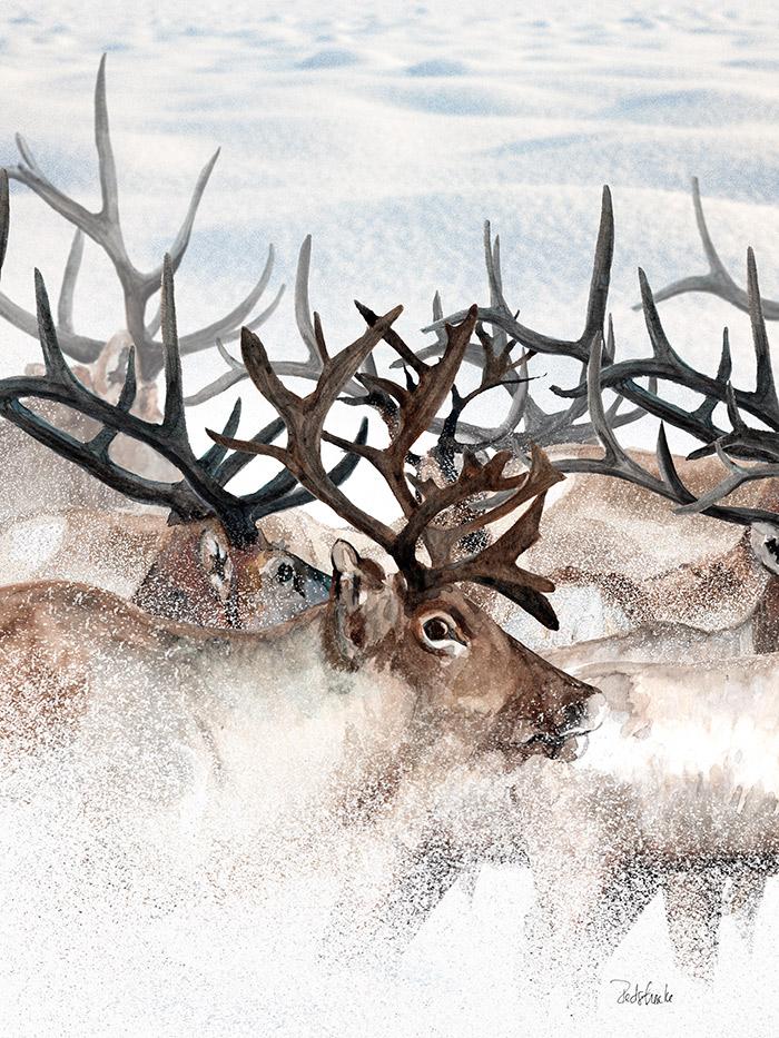 herd_redstreake.jpg