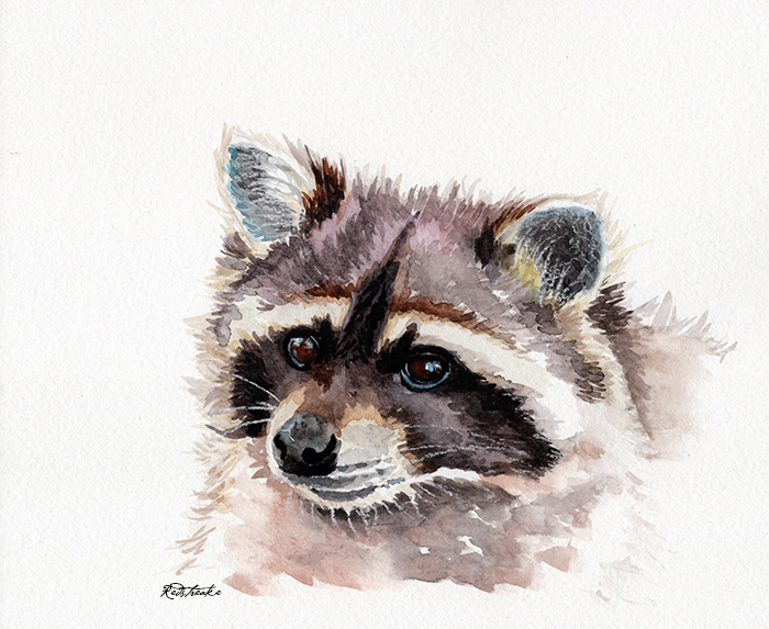 raccoon_redstreake.jpg
