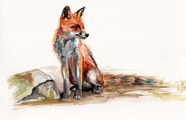 redstreake_fox_wc 2.jpg