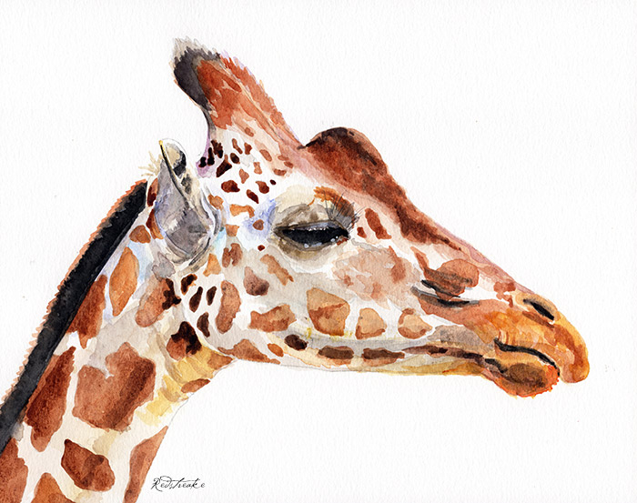 giraffeportrait_redstreake.jpg