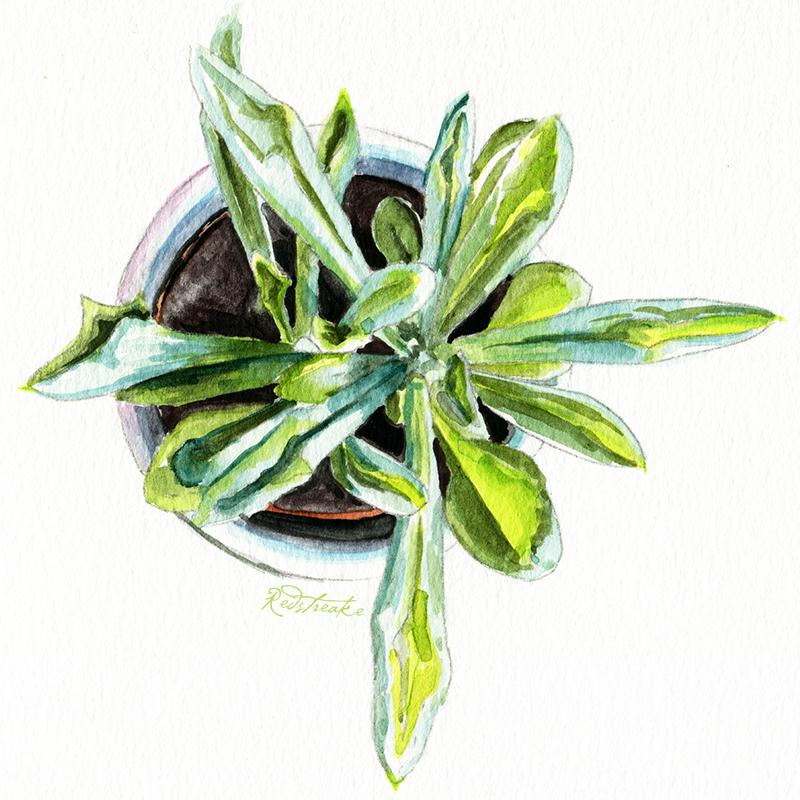 succulentpot_above1.jpg