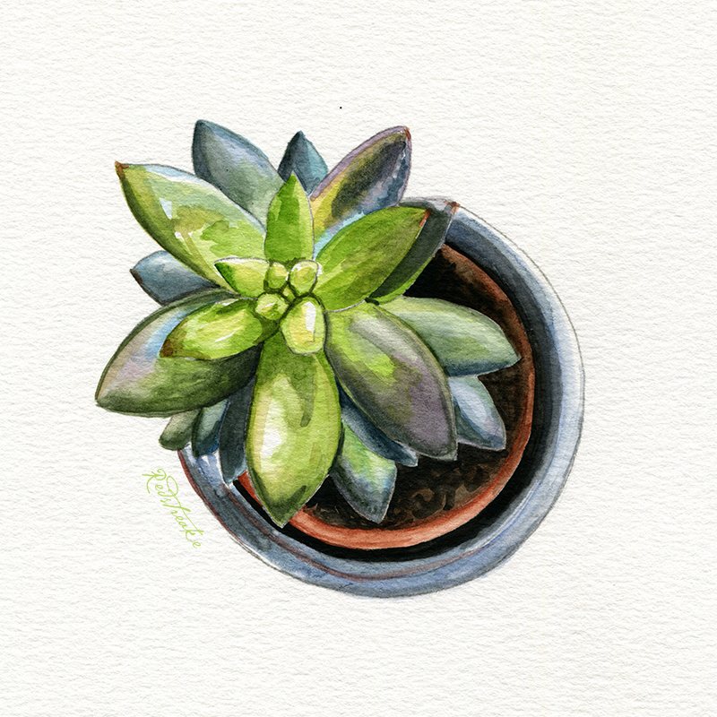 succulentpot_above4.jpg