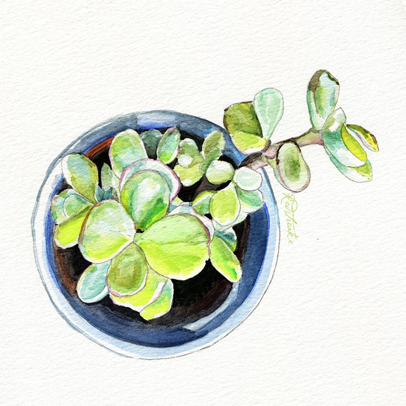 succulentpot_above5.jpg