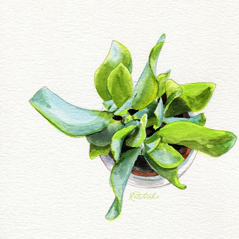 succulentpot_above6.jpg