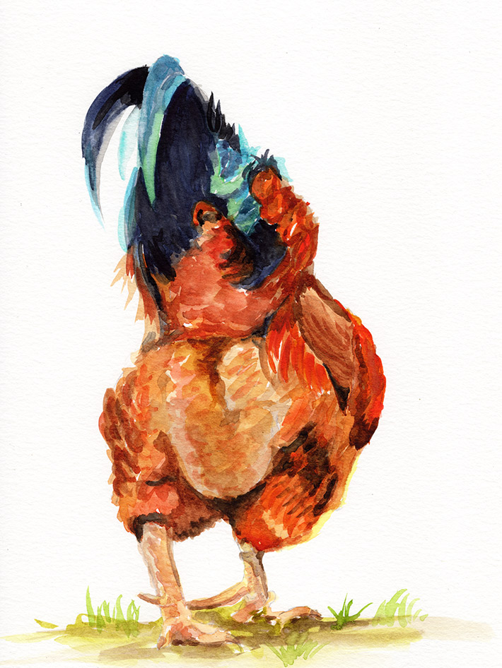 chickenbutt.jpg