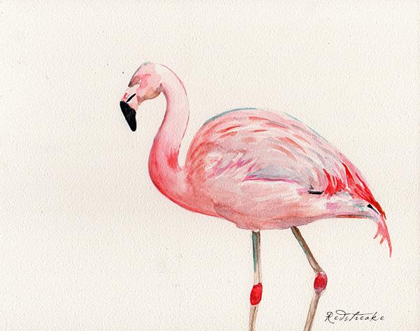 flamingo_lowres.jpg