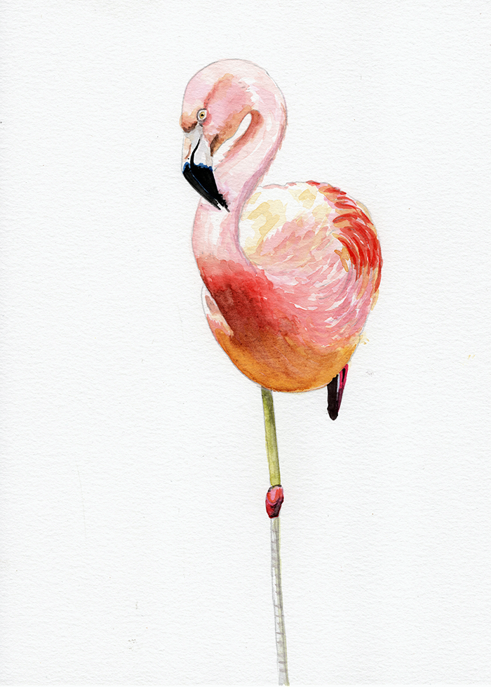 flamingo_resting_lowres.png