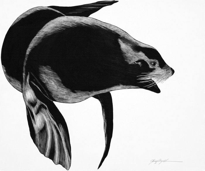 Northern Sea Lion,clayboard.