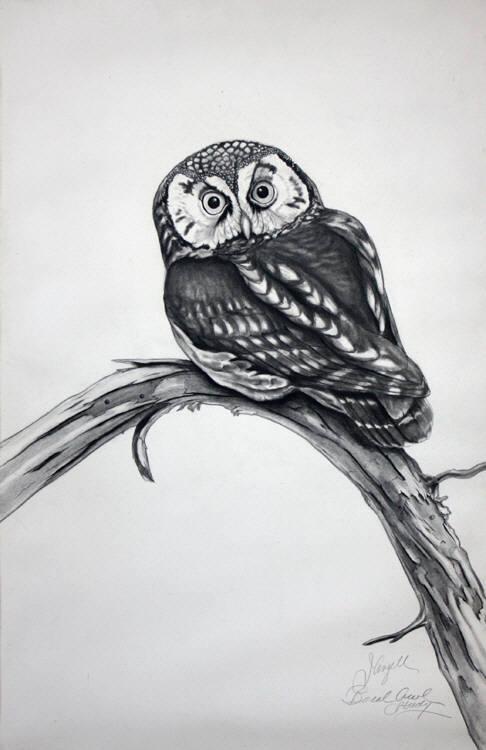 Boreal Owl Study