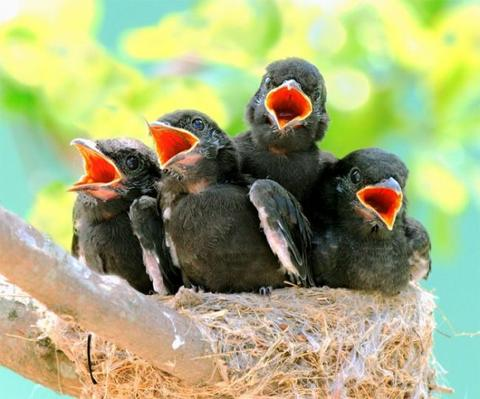 bird_in_nest_singing_large.jpg