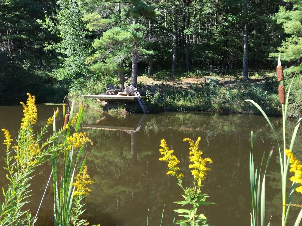 pond4.jpeg